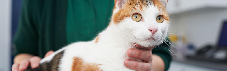Self-medicating your pet